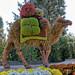 Camel Made of Flowers - Atlanta Botanical Garden