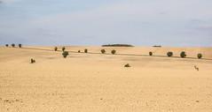 At the end of the summer (Deutscher Wetterdienst (DWD)) Tags: wetter weather trockenheit drought aridity aridness acker field landwirtschaft agriculture sommer summer