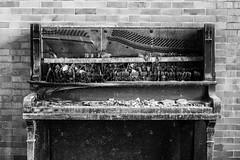 black keys. (stevenbley) Tags: abandoned urbanexploration urbanexploring urbex decay md maryland rust guerillahistorian sneak breeze grime decayed bokeh peelingpaint hospital exploring urban asylum psychiatric asbestos psychiatrichospital urbandecay piano