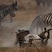 Safari Flickr (250 of 266)