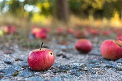 There's the worm in there (colorgraVie) Tags: apfel bokeh nikond7200 nikonlensseriese28mm128 apple