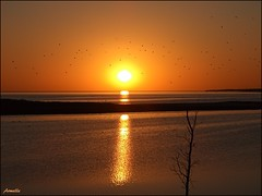 Envolée lyrique ... (Armelle85) Tags: extérieur nature paysage sunset coucherdesoleil eau reflet ciel mer océan lagune ombre silhouette