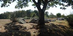 L'alignement de menhirs de Forgerais à Saint-Just - Ille-et-Vilaine - Septembre 2018 - 01 (Erwan Corre) Tags: mégalithe menhir illeetvilaine bretagne france quartzite quartz saintjust stjust cojoux landesdecojoux forgerais alignement