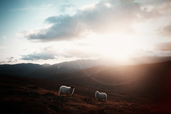(Bazzerio) Tags: fujifilm film tumblr travel summer sunset hills mountains travels analogue animal grainy grain wildcamping camp campvibes hike lakedistrict landscape x100f