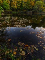 MayburyStatePark_FallColors-01 (JHTheisen) Tags: fall pond mayburystatepark leaves water trees dock