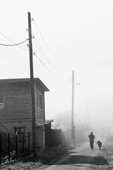 Listvyanka Fog Walk (peterkelly) Tags: digital bw asia gadventures transmongolianadventure canon 6d russianfederation russia lakebaikal listvyanka siberia fog mist man walking dog utility hydro pole alley road