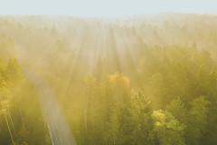 Morning light | Autumn 2018 | Aerial #284/365 (A. Aleksandravičius) Tags: kauno rajonas kulautuva forest road fog autumn sunrise morning yellow sunny day green kaunas county travel l1d20c hasselblad aerial europe lietuva lithuania fall dronas 2018 djieurope drone aerialphotography dji mavic pro djiglobal 2 mavic2 mavic2pro djimavic2pro mavicpro2 birdseye 365days 3652018 365 project365 284365