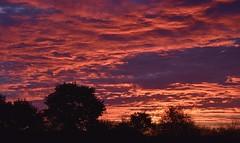 Auf Rindersuche im Morgengrauen; Bergenhusen, Stapelholm (3) (Chironius) Tags: stapelholm bergenhusen schleswigholstein deutschland germany allemagne alemania germania германия niemcy morgendämmerung sonnenaufgang morgengrauen утро morgen morning dawn sunrise matin aube mattina alba ochtend dageraad zonsopgang рассвет восходсолнца amanecer morgens dämmerung himmel sky ciel cielo hemel небо gökyüzü wolken clouds wolke nube nuvole nuage облака baumsilhouette baum bäume tree trees arbre дерево árbol arbres деревья árboles albero árvore ağaç boom träd