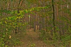 Trees and Leaves (pstenzel71) Tags: deutschland landschaft rudolstadt wald tree leaves blätter bäume forest woods darktable thuringia thüringen schaala
