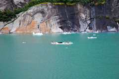 Ice Floes & Seals (Infinity & Beyond Photography) Tags: alaska insidepassage endicottarm inlet fjord icebergs ice floes seals rocks water cruising cruise photos