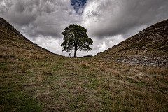 Hadrian's Wall, Sycamore Gap, Northumberland (jor5472) Tags: uk england britain greatbritain visitengland visitbritain stone landscape flickr nikon walkers backpacking backpacker picturesque scenic scenery sycamore sycamoregap northumberland roman wall hadrian's hadrian'swall