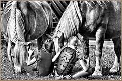 Wendy & Co (der bischheimer) Tags: pferd pferde monochrom schwarzweis tiere animals canon derbischheimer