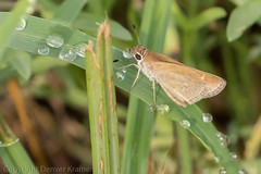 20181007-_E1A8422 (Denver Kramer) Tags: animals canon100400mmll canon7dll clearcreek denton denverkramerphotography texas skippers wildlife unitedstates us