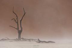 Dem Sturm standhalten/ To stand the storm (LENS.ART Photographie) Tags: wüste namib sossusvlei deadvlei namibia düne bäume sandsturm trocken dune desert sandstorm nikon d7200 landscape afrika dry