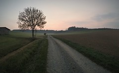 Beautiful Bavarian Boredom (roomman) Tags: germany 2018 bavaria bayern nurnberg nuernberg schwabmunchen schwabmuenchen birkach landscape nature tree evening night atmosphere nice way walk walking hike path road trees forest gravel strip schwaben country countryside side beautiful bavarian boredom
