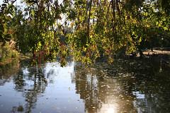 Octobersun (Marie Kappweiler) Tags: wien herbst automne fall spätsommer altweibersommer allee bäume trees city stdtpark water teich blätter sonne