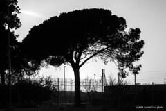 A tree in Rome (Giada Cortellini) Tags: tree trees treesilhouette albero alberi bnw biancoenero blackandwhit nature sky skyline rome roma lazio italia italy canon natura
