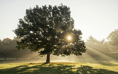 Burst of Light (Tracey Whitefoot) Tags: 2018 tracey whitefoot october autumn fall morning light burst rays mist tree sunrise nottingham nottinghamshire wollaton park hall deer