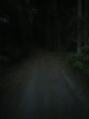 Scary Forest Road