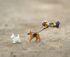 The Dog Walker (Jezbags) Tags: dog walker run dogs canon canon80d 80d 100mm macro macrophotography macrodreams macrolego minifigure minifigures lego legos toy toys terrier alsatian