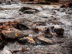 20181104-162029-050 (JustinDustin) Tags: 2018 attraction autumn blairsville fall ga georgia nga northamerica northgeorgia seasonal us usa unitedstates vogelstatepark year