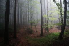 *** (pszcz9) Tags: polska poland przyroda nature las natura naturaleza nationalpark parknarodowy forest forestimages beautifulearth sony a77 pejzaż landscape drzewo tree mgła fog mist