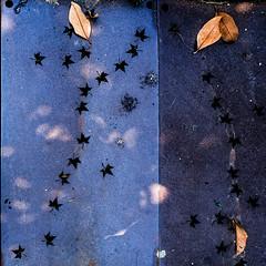 Feuilles d'automne .. (omj11) Tags: graphique marseille feuille