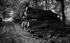 woodpile (salparadise666) Tags: zorki 3m jupiter 8 50mm agfa apx 100 boxspeed caffenol rs 15min nils volkmer vintage kb rangefinder analogue film camera bw black white monochrome germany