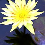 Queen Sirikit Botanic Gardens thumbnail