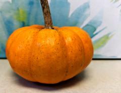 Autumn - Gourd 10-03-18 (MelenaMe) Tags: autumn gourd food edible pumpkin fruit
