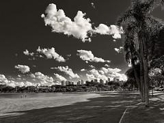 X10_DSCF4376_ON85 c_PC (A. Neto) Tags: blackwhite bw monochrome landscape sky clouds palmtree trees skyline fujifilmx10 x10 fujifilm