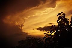 The cumulonimbus's teeth / Les crocs du cumulonimbus (Philippe Meisburger Photo) Tags: supercell supercellular supercellulaire supercellule cellule nature sunset coucher de soleil soir evening nuage nuages cloud clouds storm stromcloud orage ciel sky arbre arbres tree trees summer ete été hautrhin alsace grand est france europe philippe meisburger août august 2014