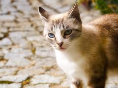 Suave y mimosa (Luicabe) Tags: airelibre animal cabello calle enazamorado exterior felino gato luicabe luis macrofotografía mamífero mirada naturaleza ojos vertebrado yarat1 zamora