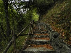 stairs to the heaven!!! (panoskaralis) Tags: forest path footpath stairs wood green wooden pozar macedonia greece greek hellas hellenic outdoor landscape nikonb700 nikon nikoncoolpixb700 macedoniagreece