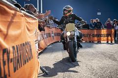 StephStunts beim Tag der Harley (Technik Museen Sinsheim Speyer) Tags: technik museum sinsheim schnepper tag harley motorradwochenende stephstunts stephaniesaayman stuntshow action fatgregg