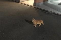Today's Cat@2018-10-16 (masatsu) Tags: cat thebiggestgroupwithonlycats catspotting cameraphone apple softbank iphone