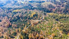 Autumn Colors by drone (Waidler_75) Tags: djimavic2pro djihasselblad bayerischerwald baywald bayern bavarianforrest bavarian nature landscape autumn drone mavic2pro dji colors