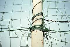 Verde speranza - The evergreen of hope (Lorenzo BC-1) Tags: rete net palo pole strappi rips tears cielo sky verde green blu pellicola film fuji petri analogico analogue