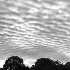 Cloud Patterns; Long Island, New York (hogophotoNY) Tags: iphonecamera iphone appleiphone appleiphone7plus us usa longislandny longisland longislandnewyork newyorkstate newyork sky cloud clouds