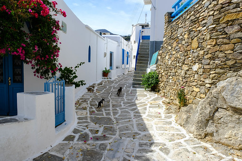 Cat guides of Lefkes