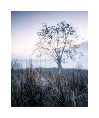Cobweb (John Ormerod) Tags: tree mist landscape autumn morning cobweb halloween season dawn cold fog misty photograph photography