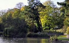 Late October (* RICHARD M (Over 8 MILLION VIEWS)) Tags: scapes seasons october autumn fall heskethpark southport sefton england uk unitedkingdom britain greatbritain britishisles nature parks publicparks parkland woodland water lake trees municipleparks