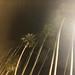 Palm Trees at Night at Ohana Music Festival - Doheny State Beach in Dana Point, California