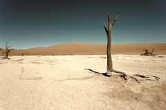 Sand Pan _3821-2 (hkoons) Tags: namibsandsea namibnaukluftnationalpark sanddunesea sesriemgate southernafrica tsauchabriver africa african deadvlei namibia sesriem tree unesco dune dunes growth plants sand sandy vegetation