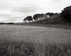 By Hill of Johnston (megalithicmatt) Tags: leslie hillofjohnston zenazonpg50mmf45 xtol bw bronicags1 ilfordhp5plus400 bridgeofjohnston millfield auchmar courtestown gadie millofauchmar