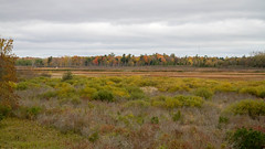 Fall Colors (Lester Public Library) Tags: woodlanddunes woodlanddunesnaturecenter naturecenter naturepreserve nature grass trees sky clouds tworiverswisconsin tworivers wisconsin lesterpubliclibrarytworiverswisconsin readdiscoverconnectenrich