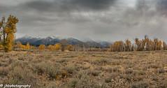 Grand Teton National Park - Fall 2018-41.jpg (jbernstein899) Tags: trees mountains grandtetonnationalpark wyoming