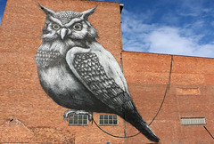 Streetart in Hasselt (B) (Rick & Bart) Tags: hasselt city streetart graffiti art rickvink rickbart streetartfestival canon eos70d mural urban urbanart roa belgium vlaanderen