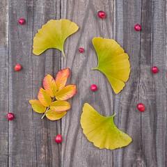 Autumn Flat Lay 2179 B (jim.choate59) Tags: jchoate on1pics leaves ginkgo rose wood rustic flatlay autumn fallseason berry