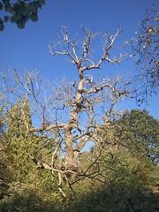 On its Own – VI (marc.barrot) Tags: nature landscape park tree uk nw3 london hampsteadheath